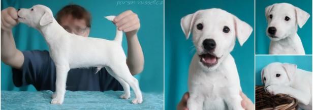 Puppies update